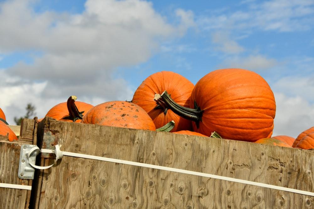 2 pumpkins on white wooden fence under blue sky during daytime