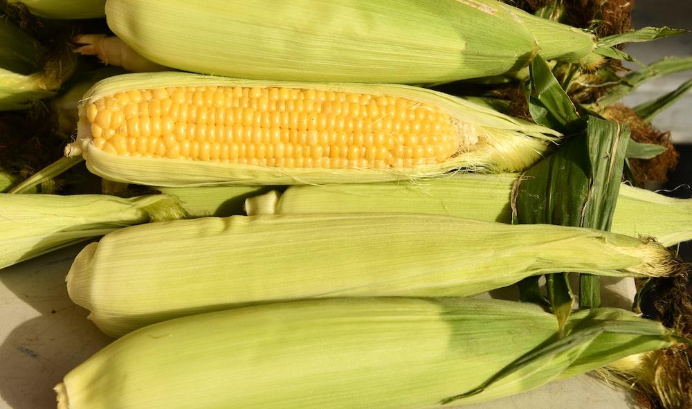 yellow corn on green grass