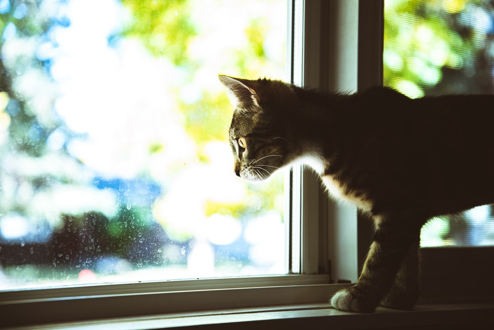 black and white cat on window