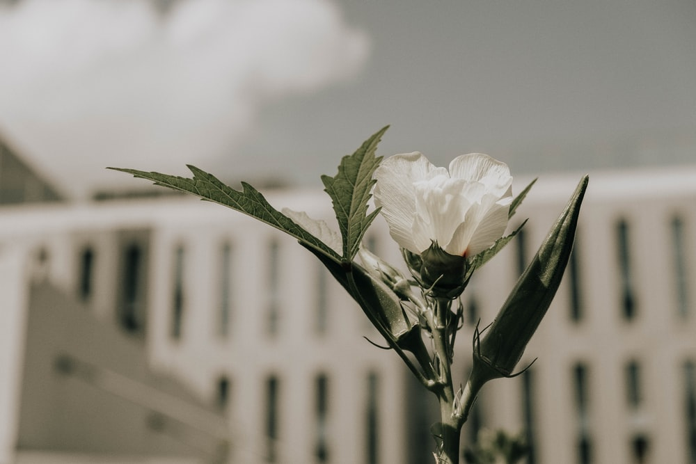 white flower in grayscale photography