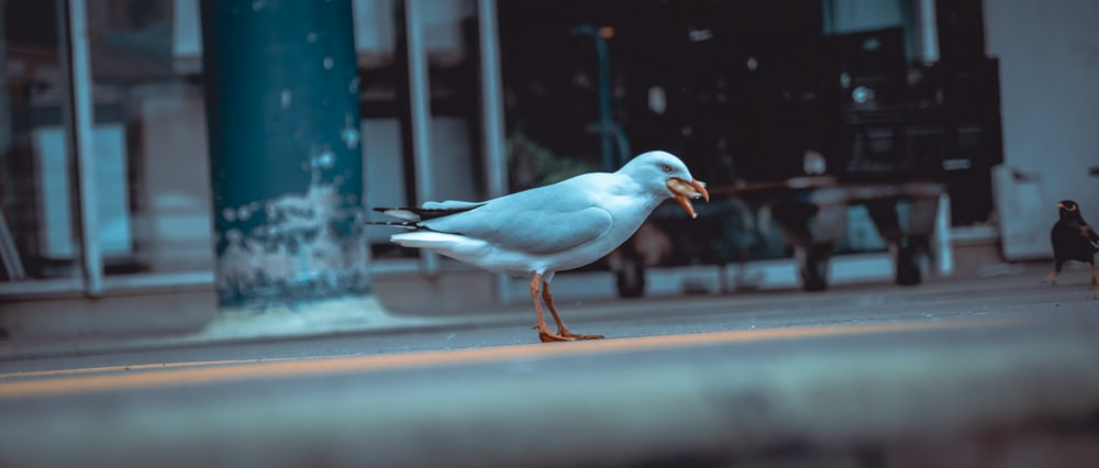white bird on brown wooden plank during daytime