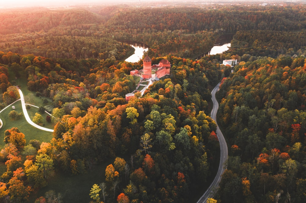 aerial view of trees and road during daytime