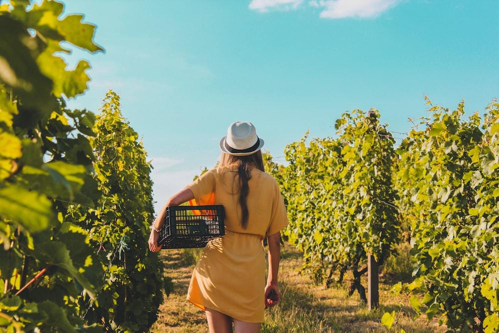 Vineyards of the Costa Brava Barcelona-Home