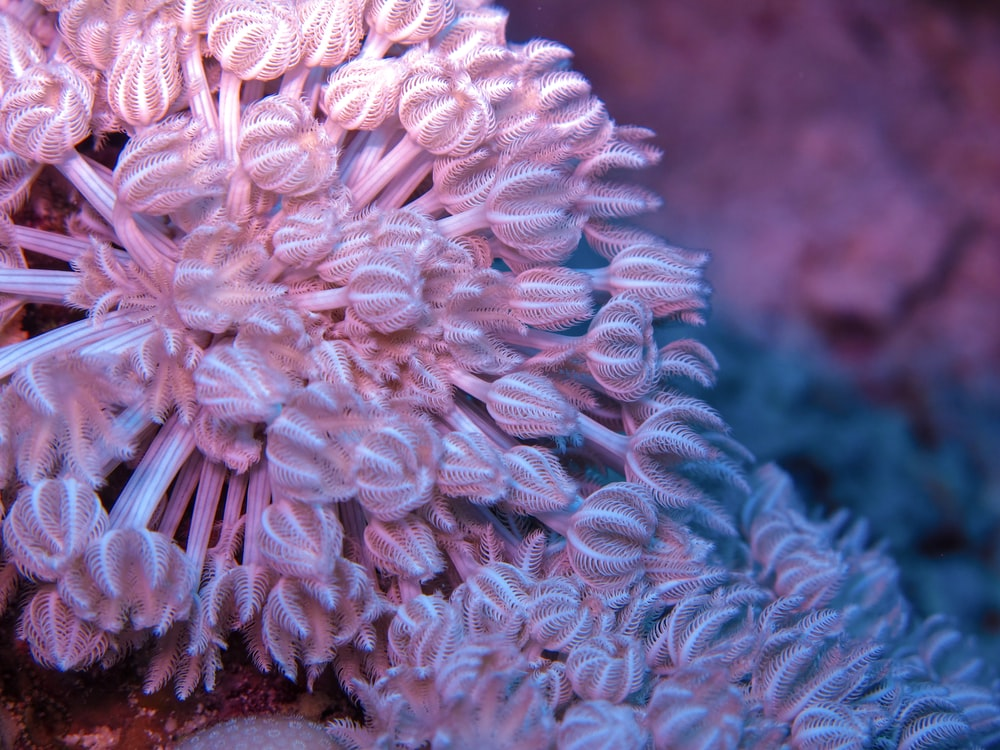 white and brown coral reef