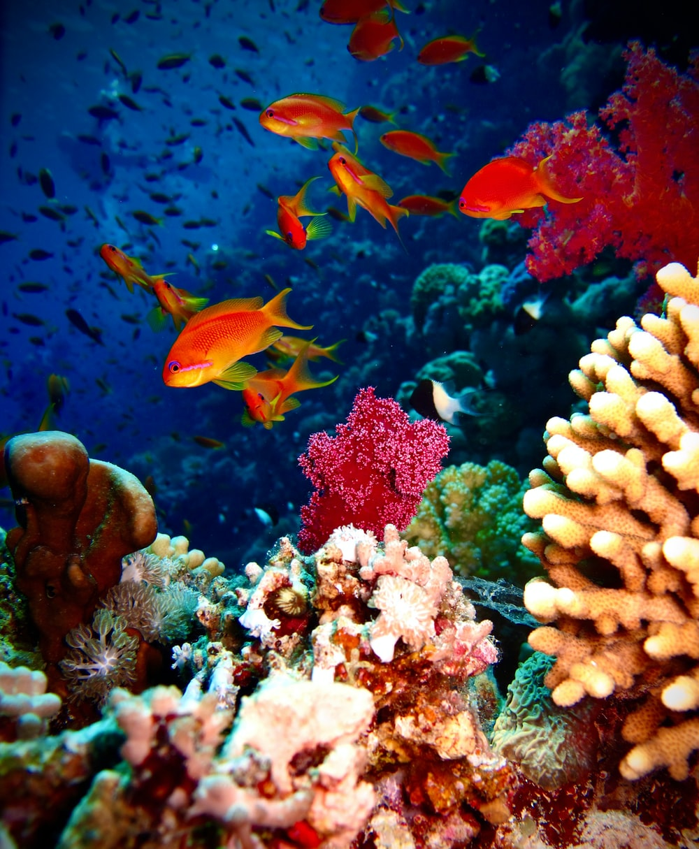 orange and white fish on coral reef