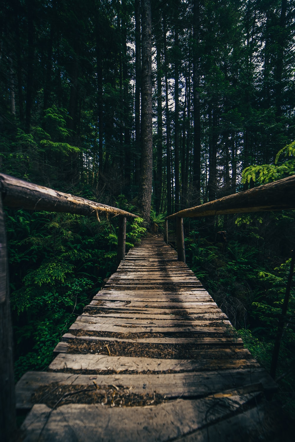brown wooden bridge in the forest