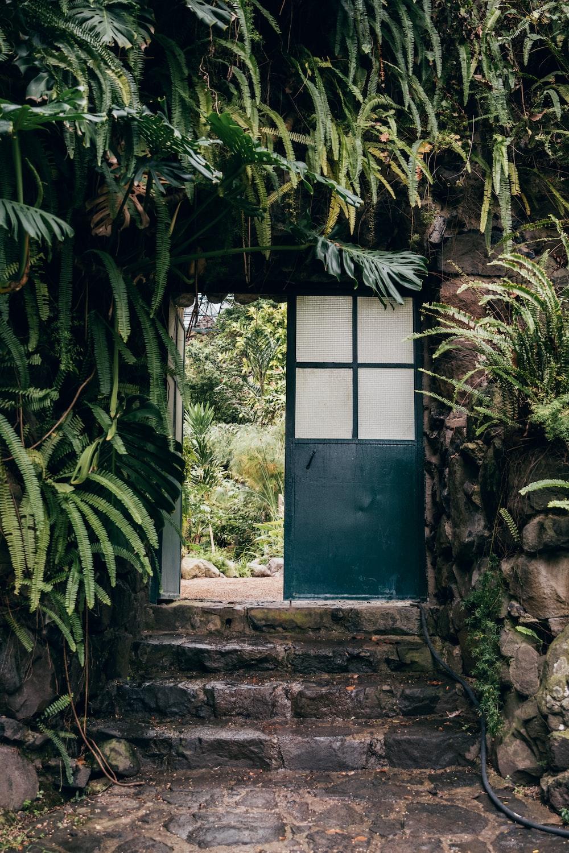 blue wooden window frame near green leaf plant during daytime