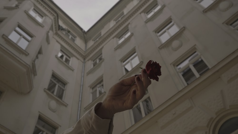 person holding red flower near white concrete building during daytime