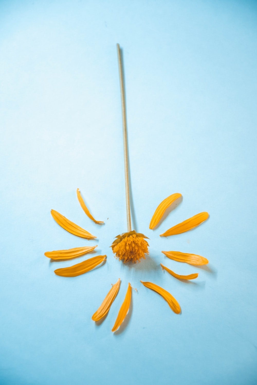 yellow daisy on white surface