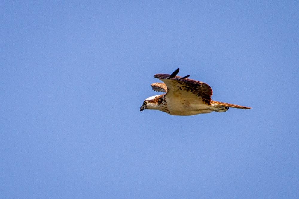 white and black bird flying during daytime