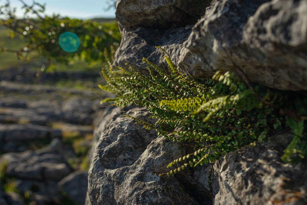 green fern plant on gray rock during daytime