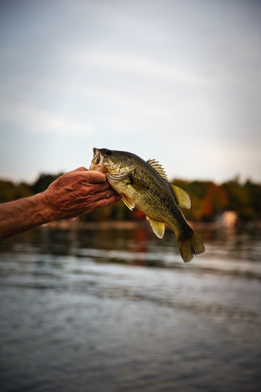 person holding a fish during daytime