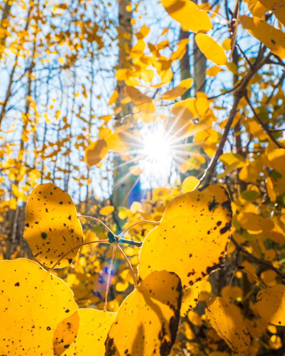 yellow leaves on tree during daytime