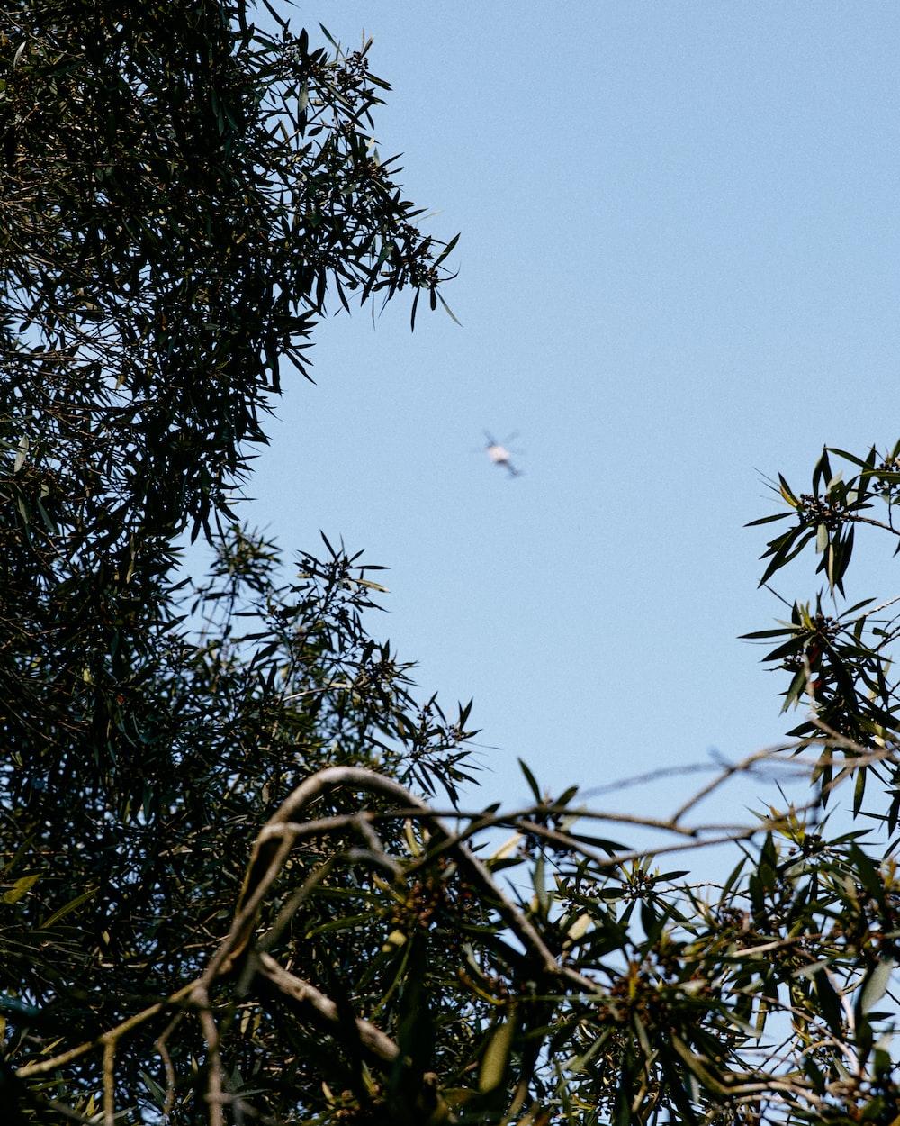 birds flying over green tree during daytime