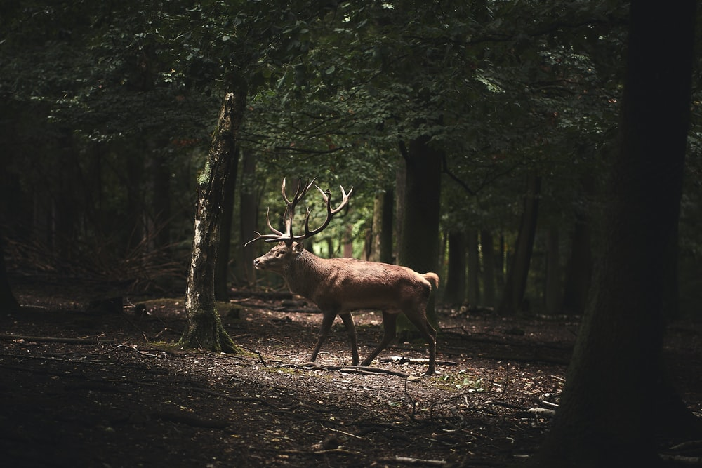 brown deer on forest during daytime