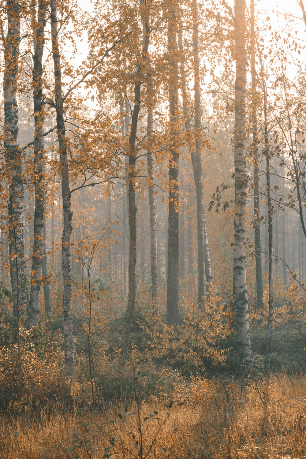 brown trees on forest during daytime