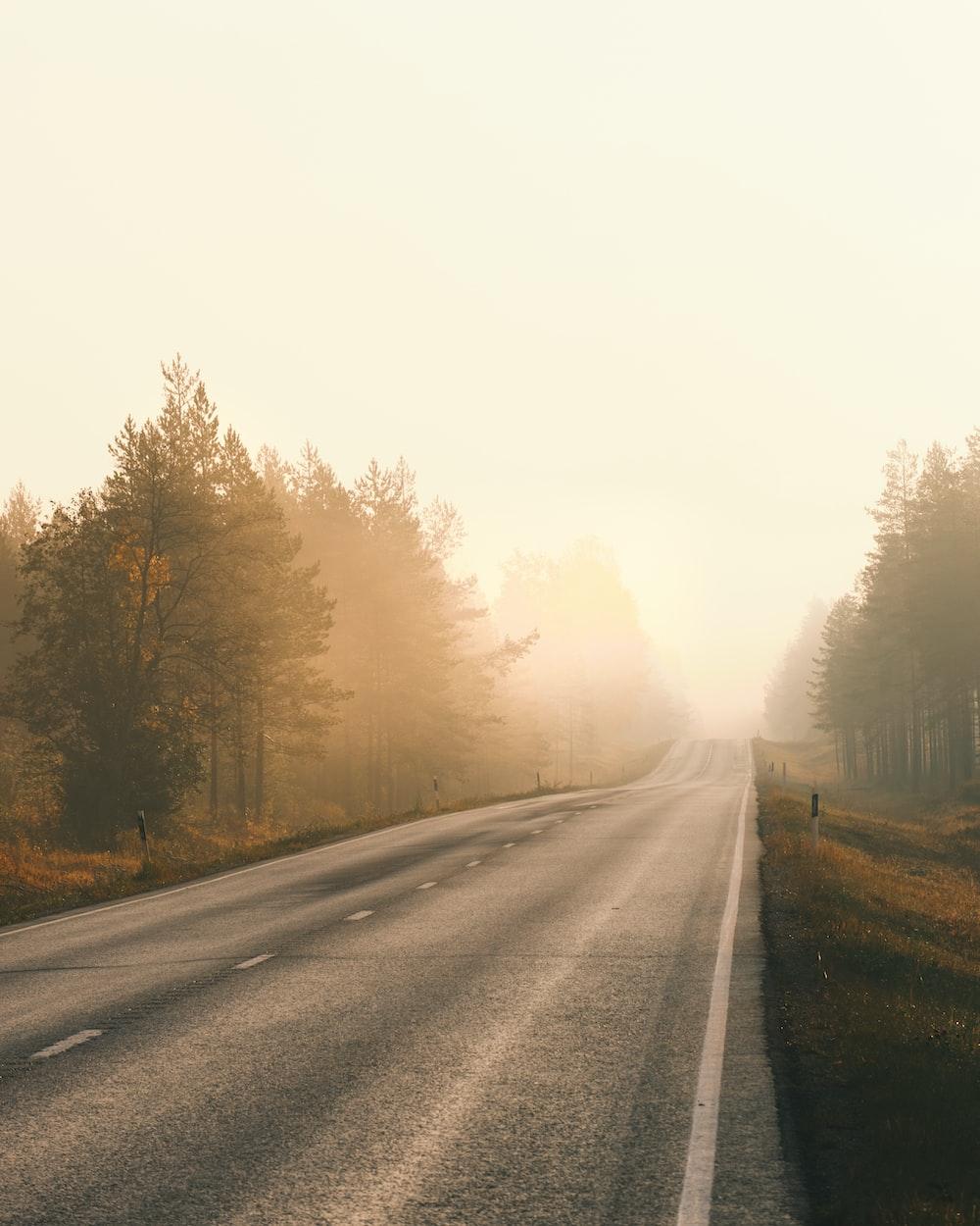 gray asphalt road between trees during daytime
