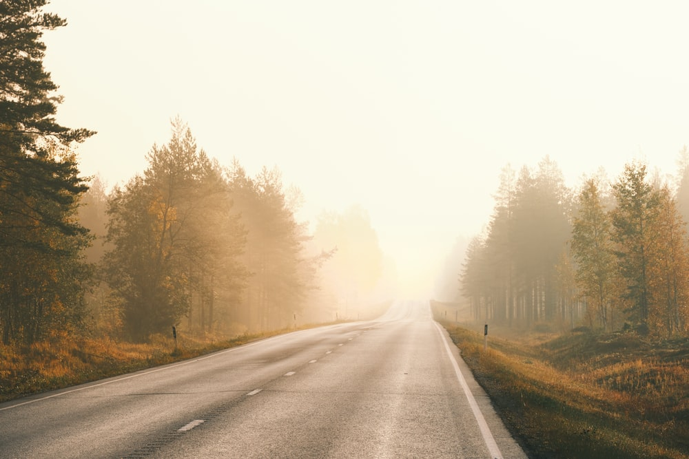gray asphalt road between trees covered with fog during daytime