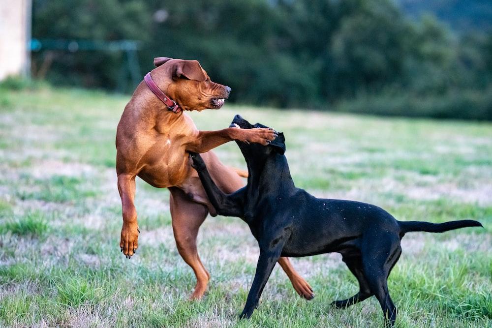 black and tan short coat medium dog on green grass field during daytime