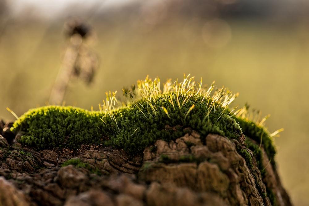 green grass on brown rock