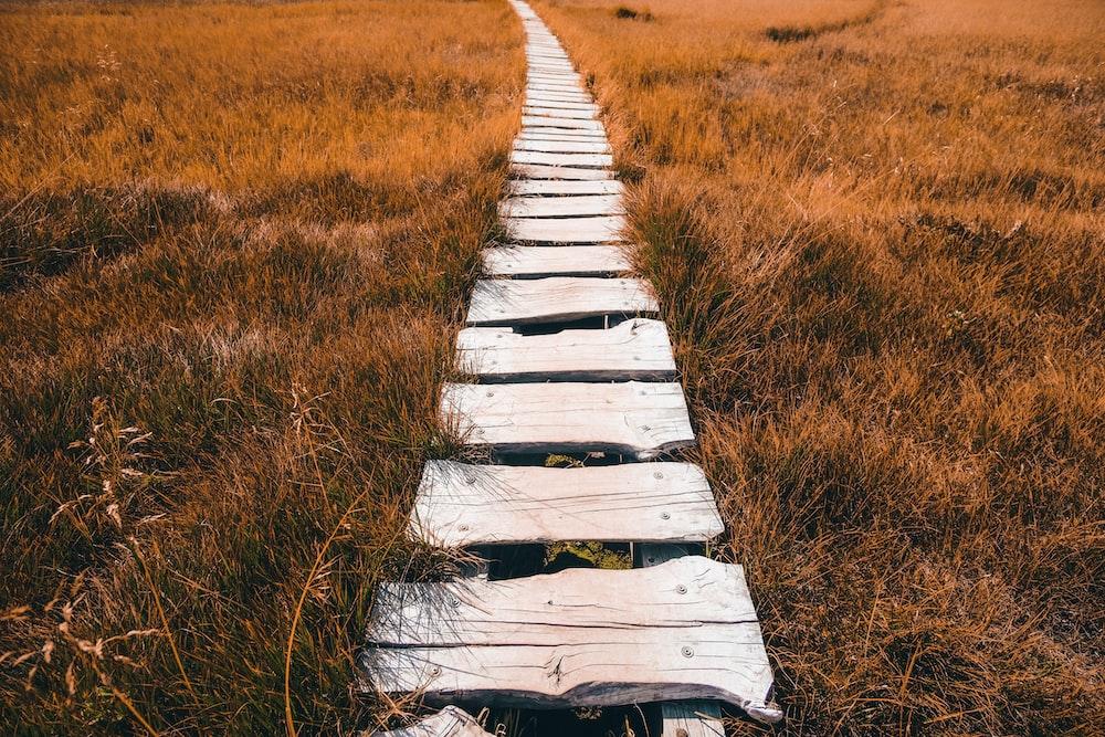 white wooden pathway between brown grass field during daytime