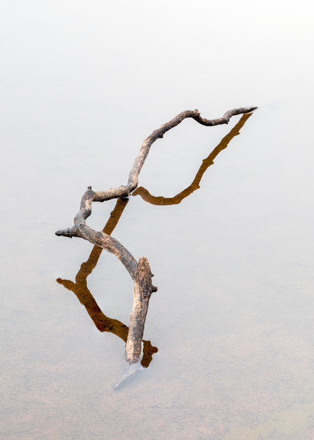 brown tree branch with white background