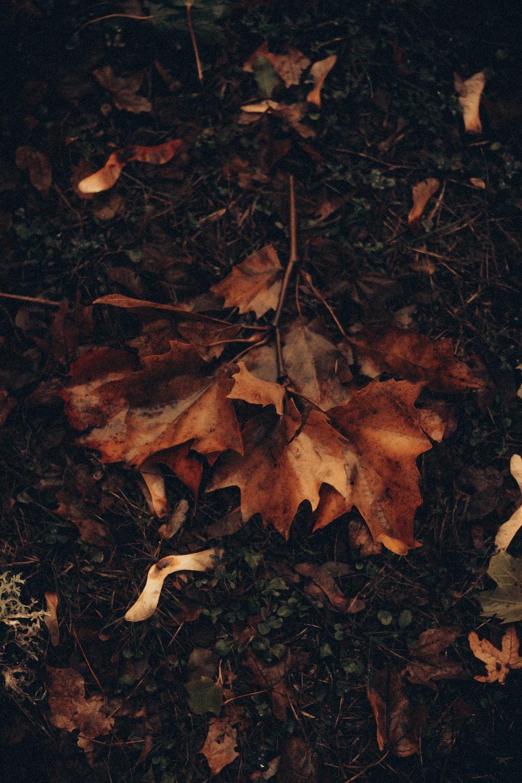 brown dried leaves on ground