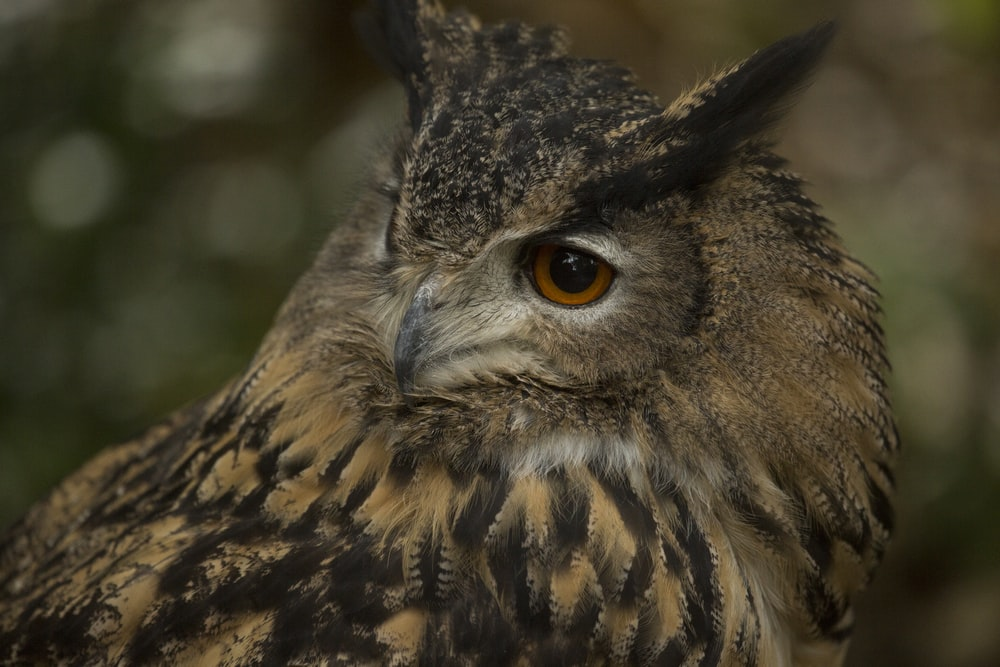 brown and black owl in close up photography