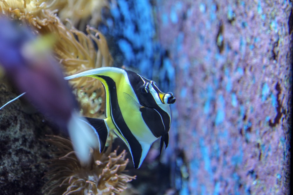 blue yellow and black striped fish