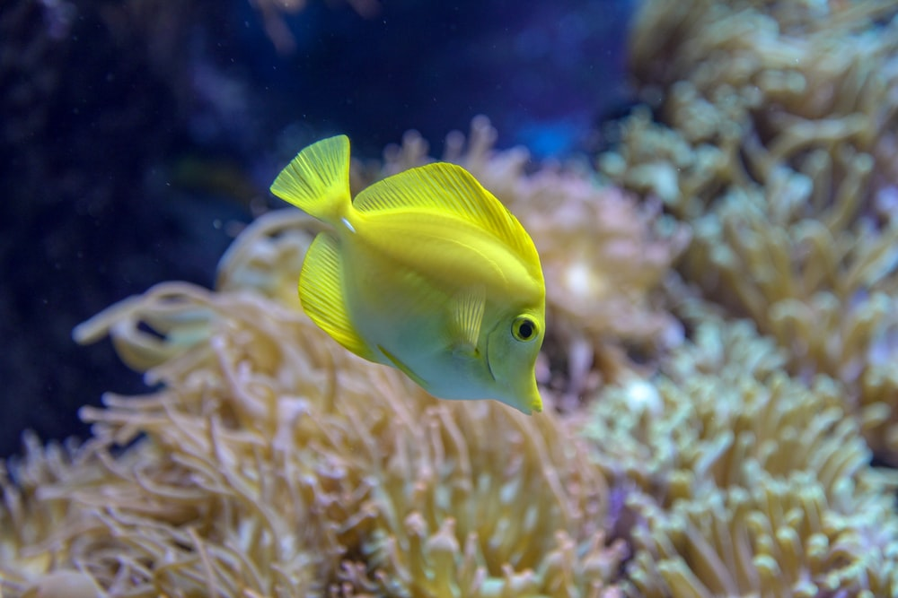 yellow fish in close up photography
