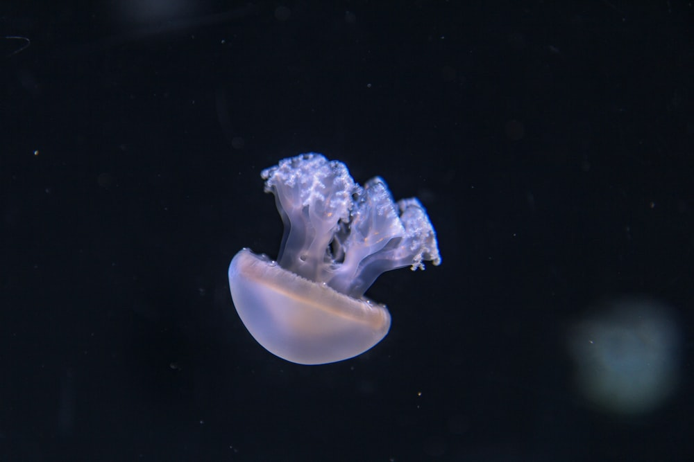 white and gray jellyfish in water