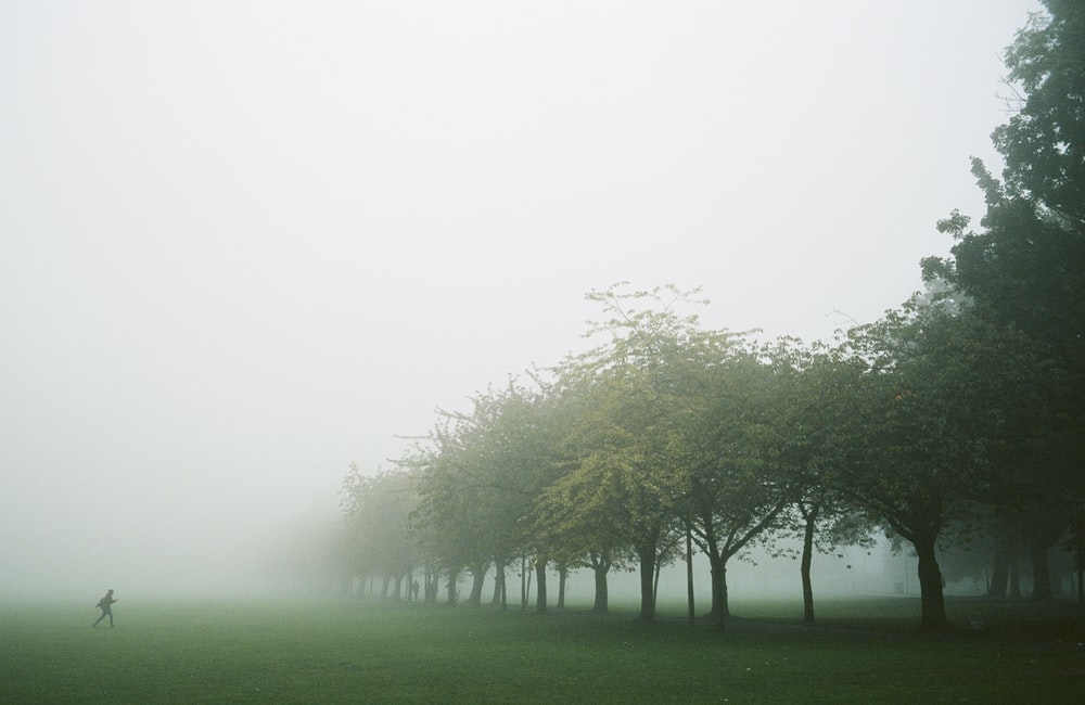 green grass field with trees covered with fog