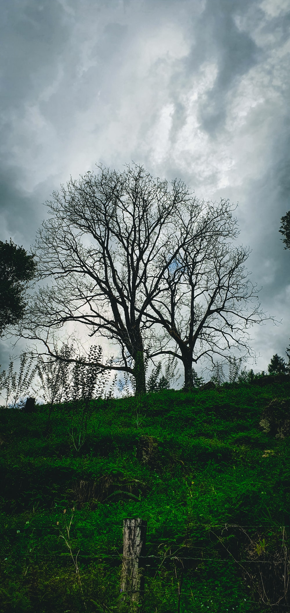 leafless trees on green grass field under cloudy sky