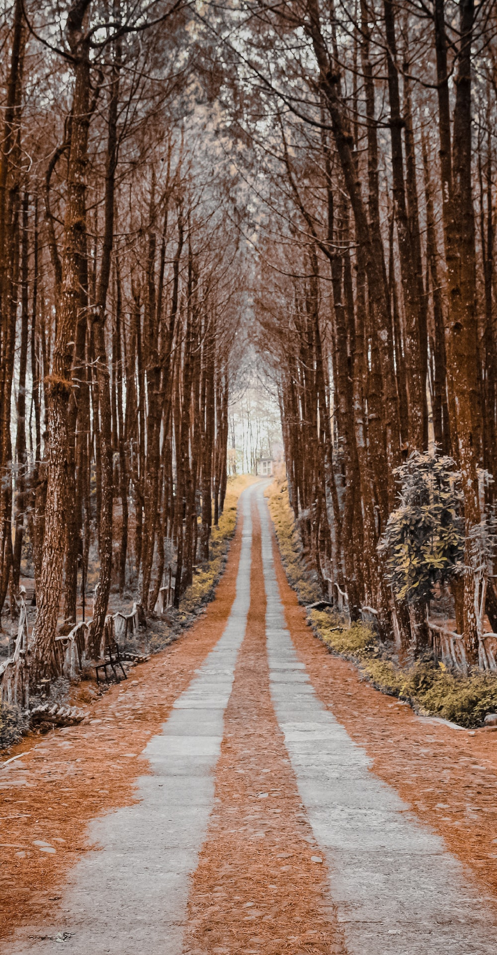 brown pathway between brown trees during daytime