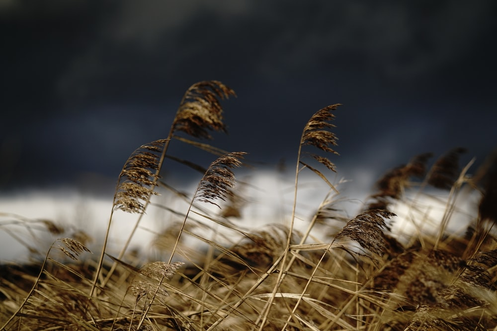brown grass in close up photography