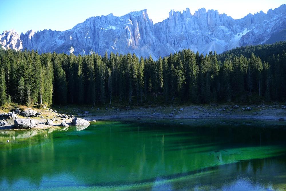 green pine trees near lake and mountain during daytime