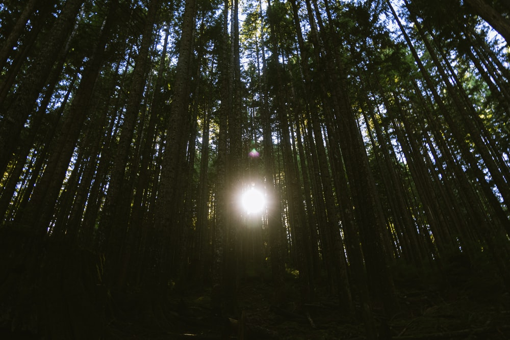 sun in the middle of forest