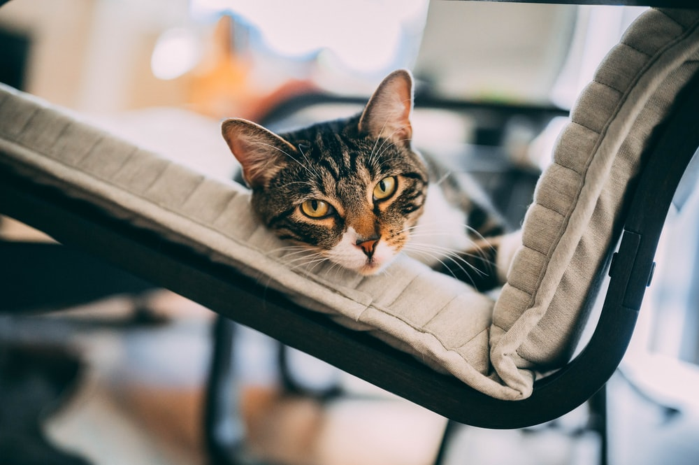brown tabby cat on white and black textile