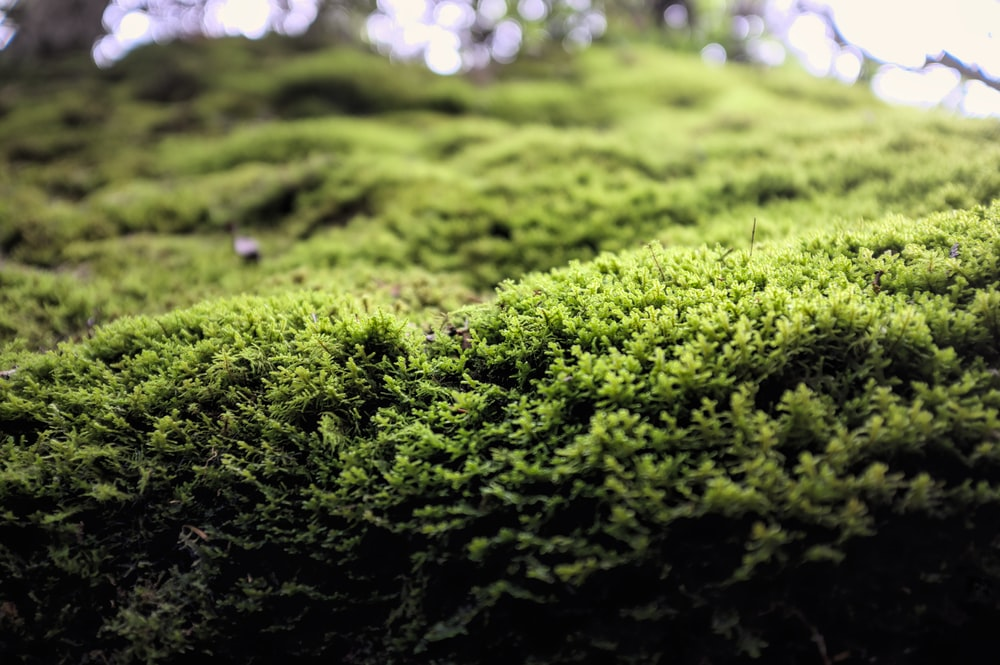 green moss on black soil