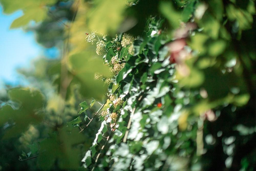 green and white flower buds in tilt shift lens
