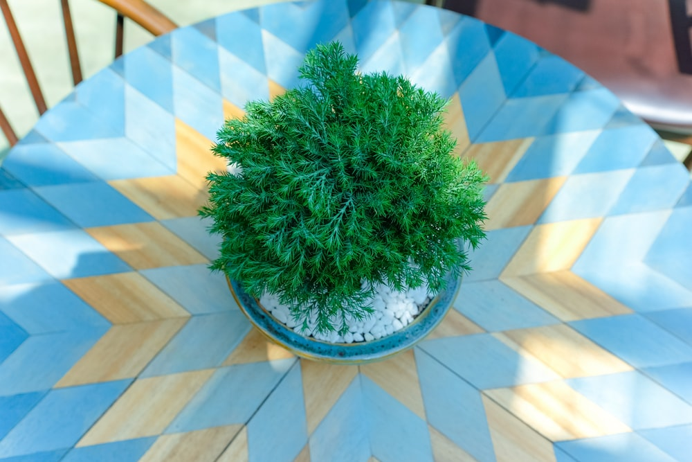 green plant on blue and white checkered round table