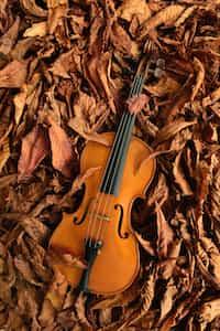 Violin lyrics stories