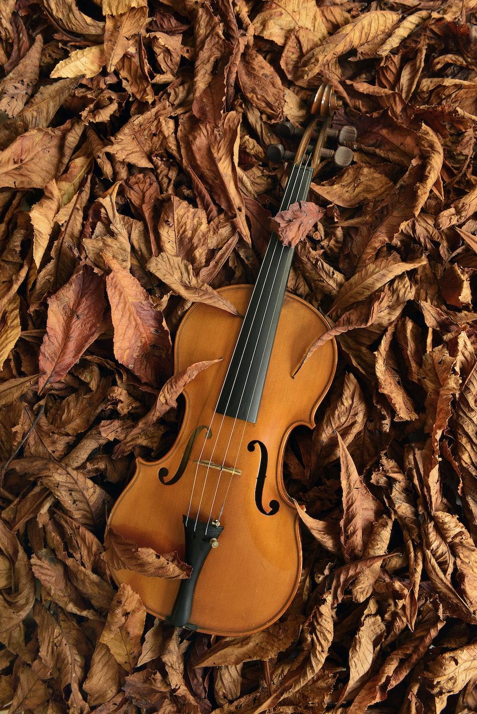 brown violin on brown dried leaves