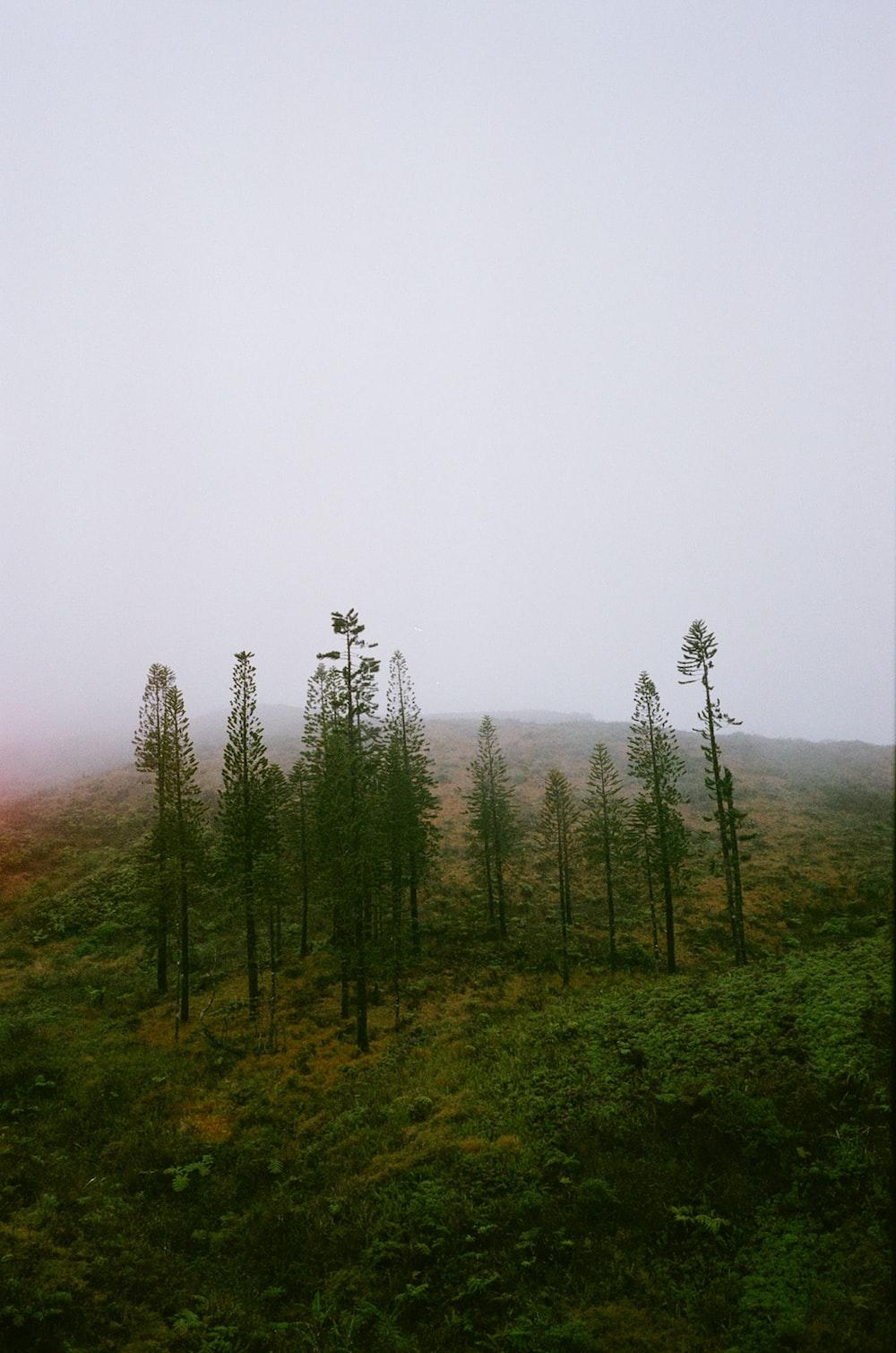 green grass field with fog