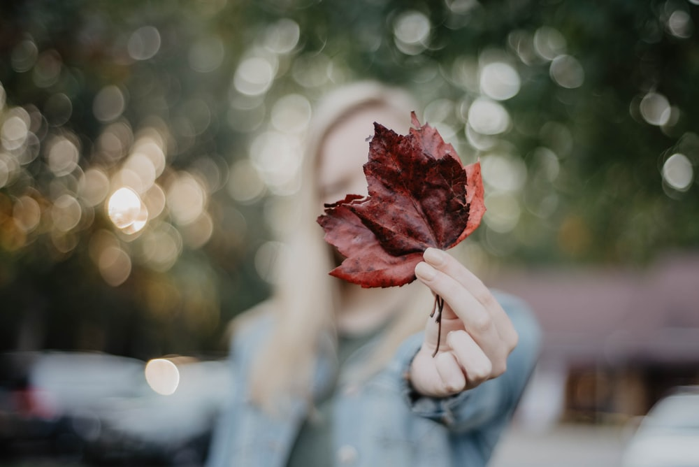 person holding red and white rose