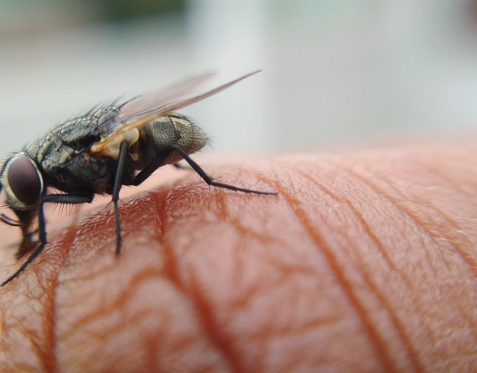 black and yellow fly on human skin