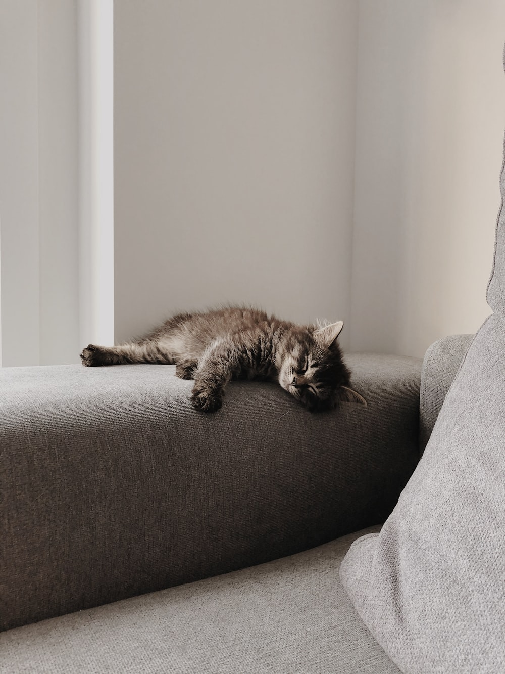 brown tabby cat lying on gray sofa