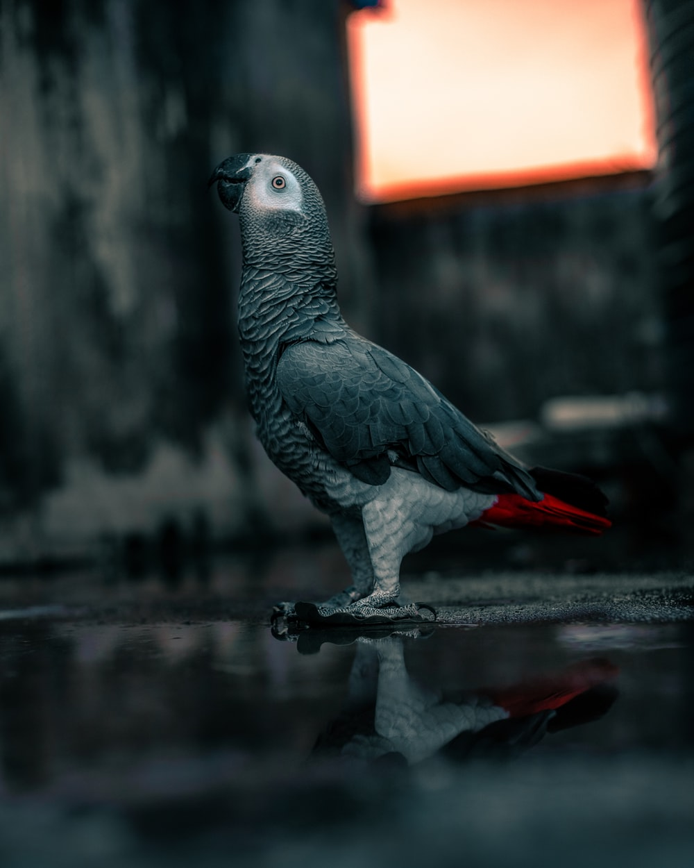 gray and white bird on cage