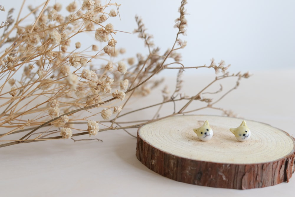 white bird on brown wooden round table
