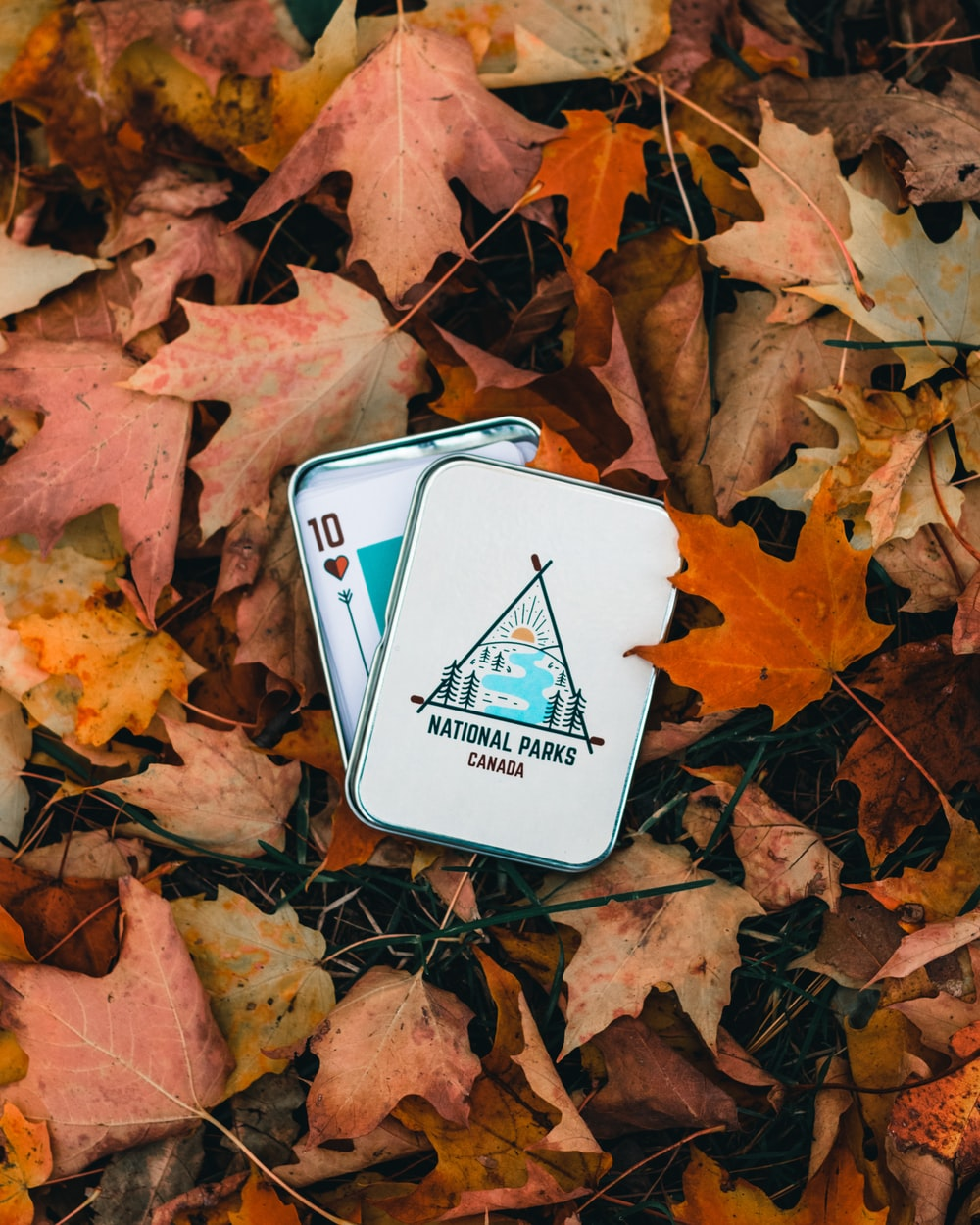 white and blue playing card on brown dried leaves